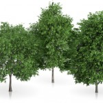 High-quality tree models