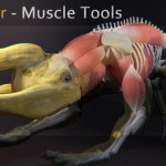 Muscle Tools – exclusive demo