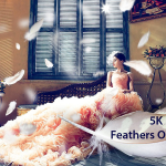 50 Feathers Overlays